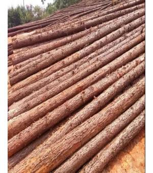 供应杉木、杂木、原木、手机版必威、床板