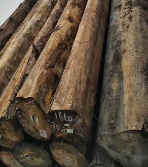 供应杂木原木 家具 包装箱 旋切 胶合板用材
