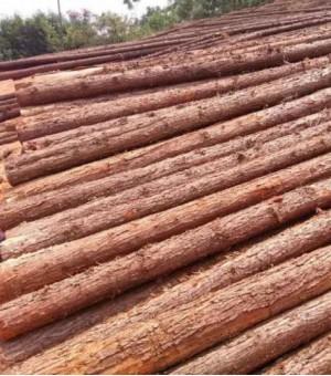 供应杉木、杂木、原木、手机版必威、床板、方条规格可以定制