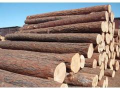 南美原木市场沉闷,红檀香集中入市引起广泛关注