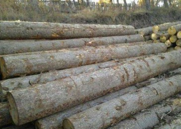木材市场依奇、白松等原木价格行情