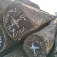 非洲核桃木原木