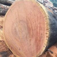 户外山樟木木材