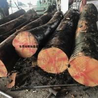 德国原木榉木板材 德国榉木毛边材 榉木直边材  榉木厂家直销