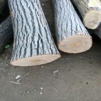 供应板栗原木
