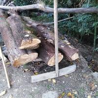供应20头以上硬杂木