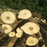 求购大量白杨树原木