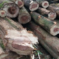 收购柜桉香樟水杉圆木