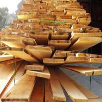 求购樟子松实木板材