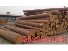 北京原木供应 俄罗斯樟子松 落叶松 定尺加工