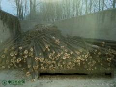 出售柏木成材及柏木树枝