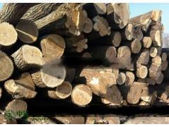 供应优质楸木原木