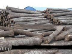 供应楸木原木