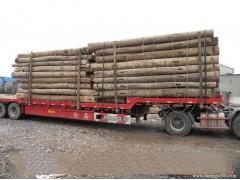 常年超低价供应新旧榆木
