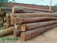 供应上海老榆木(上海老榆木门板)