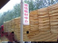 大量销售杨木皮子,杨木新办