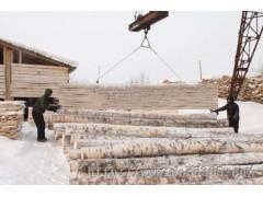 长期供应俄罗斯细皮桦木原木