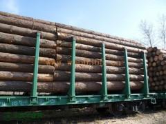 进口俄罗斯桦木