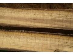源头生产/销售菲律宾相思木(Acacia mangium)