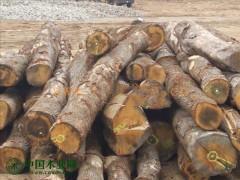 厂家直销白桦木原木及手机版必威