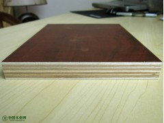 桉木多层板