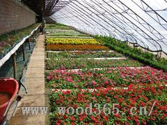 生态餐厅温室建设+景观温室大棚建设+园艺温室建设