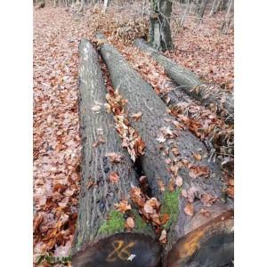 现货热销欧洲材橡木原木木材家具用优质橡木原木3m*60