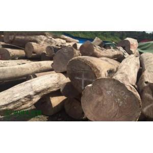 家具料巴厘黄檀 大果紫檀 大板、原木、方料长期供应