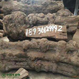 刺猬紫檀树瘤料厂家直销