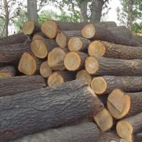 大量收购湿榆木原木