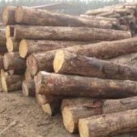 常年收购4米,2.5米,3米松原木