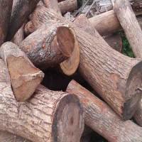 求购川内香樟木原木