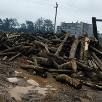 大量供应杂木 松木锯材