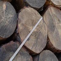 出售安哥拉樟子松原木