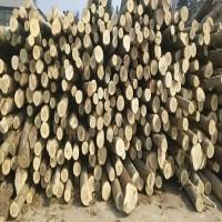 出售吉林白山地区杨木原木