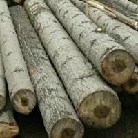 求购直径30公分以上杨木原木