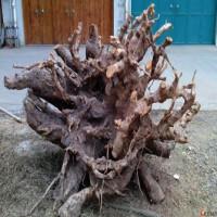 采购香樟树树兜树根