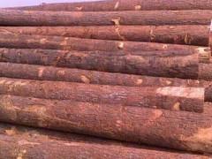 求购红松原木