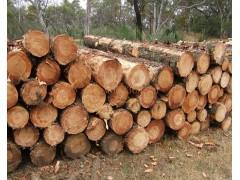 收购黄龙县附近的松木原木