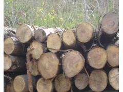 采购3.1米长的杨木原木