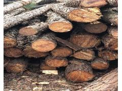 大量求购油松原木