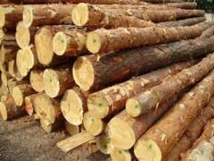 出售四米樟子松原木
