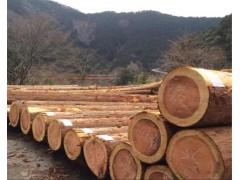 求购日本柳杉原木