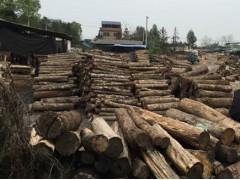 收购八角木、荷木、枫木原木