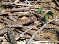 大量收树枝、树皮、破碎料
