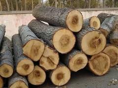 常年收购杨木原木