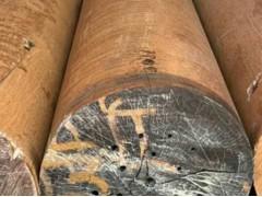 求购长15米、尾径50cm的大杉木