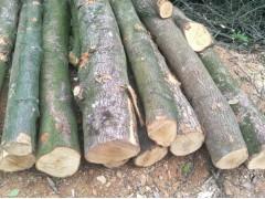 大量收购新鲜2米荷木