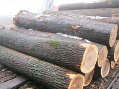 求购桐木原木和榆木原木
