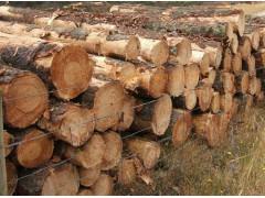 求购松木、桉木原木
